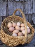 Basket of Brown Eggs Fotografisk trykk av Michael Melford