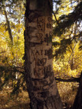 Graffiti and Proclamations of Love Scar a Tree Trunk Photographic Print by Ed George