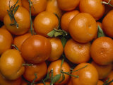 Close View of a Pile of Tangerines Photographic Print by Michael Melford