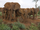 Family of Elephants Dusting in Samburu National Reserve Photographic Print by Michael Nichols