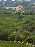 Vineyard in the Anderson Valley Photographic Print by Richard Nowitz