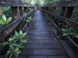 Walkway at a Nature Refuge on Vieques Island, Puerto Rico Photographic Print by Scott Warren