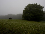 Hay Bale in a Field in Early Morning Fog Photographic Print by Rebecca Hale