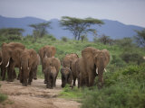 Group of African Elephants on the Move in Samburu National Park Photographic Print by Michael Nichols