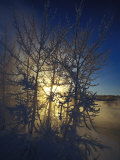 Hoar Frost on Trees Along the Yukon River Photographic Print by Nick Norman