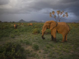 Elephant Family on the Move in Samburu National Park Photographic Print by Michael Nichols