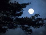 Moonrise over Matsushima's Pine Clad Islands Photographic Print by Michael S. Yamashita
