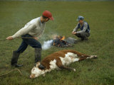 One Boy Holds a Cow with Rope as Another Heats a Branding Iron Photographic Print by Jack Fletcher