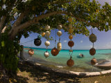 Fishing Floats Hanging in a Tree on a Tropical Shore Photographic Print by Beverly Joubert