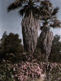 Palm Trees and Flowers in San Juan Photographic Print by Charles Martin