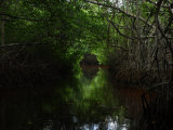 Mangrove Trees Photographic Print by Raul Touzon