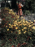 Woman Looks at Flowers Bordering the Sidewalk Photographic Print by Charles Martin
