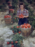 Woman Kneeling in a Field Holds a Handful of Ripe Red Peppers Photographic Print by Jack Fletcher