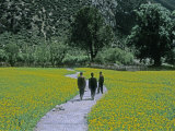Chinese Tourists on a Path Through Mustard Fields on the Lhasa Road Photographic Print by Gordon Wiltsie