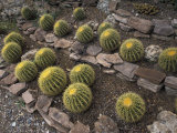 Cactus at the Boyce Thompson Southwestern Arboretum Photographic Print by Scott Warren