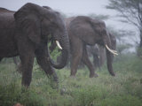 Elephant Family on the Move During a Hard Rain Photographic Print by Michael Nichols