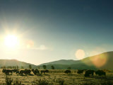 Herd of Bison Graze a the Sun Rises over the Gros Ventre Mountains Photographic Print by Drew Rush