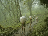 Porters in Lowland Rain Forests En Route to Mount Everest Base Camp Photographic Print by Gordon Wiltsie