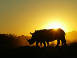 Two Rhinoceroses Standing Side by Side at Sunset Photographic Print by Beverly Joubert