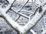 Tangle of Snow Covered Tree Branches in Front of a House Photographic Print by Raul Touzon