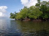 Mangroves a the Edge of a Small Island in the Celebes Sea Photographic Print by Darlyne A. Murawski