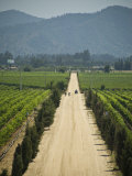Casa Blanca Valley, Wine Growing Region West of Santiago, Chile Photographic Print by Richard Nowitz