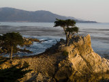 Cypress Tree Along the 17-Mile Drive Outside of Carmel in Monterey County Fotografisk tryk af Richard Nowitz