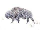 Buffalo Bracing Against the Snow Near Grand Teton National Park Photographic Print by Jodi Cobb