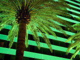 Green Hued Palm Tree on the Las Vegas Strip Is Lit Up at Night Fotografiskt tryck av Pete Ryan