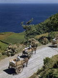 Mules Pull Carts Laden with Produce on Coastal Road Overlooking Ocean Photographic Print by Robert Sisson