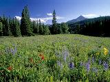 Meadow of Wildflowers Below Lone Mountain Photographic Print by Gordon Wiltsie