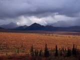Colorful Tundra under a Brooding Sky in Denali National Park Photographic Print by Ed George