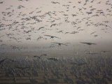 Sandhill Cranes Flying and Resting in Morning Fog Photographic Print by Marc Moritsch