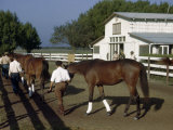 Grooms Walk Colts and Fillies around Paddock after Morning Workout Photographic Print by Howell Walker