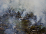 Smoke from Smoldering Forest Fire in Venezuela Photographic Print by Mattias Klum