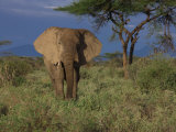 Elephant in Samburu National Park Photographic Print by Michael Nichols