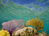 Underwater View of a Coral Reef in Belize Photographic Print by Michael Melford