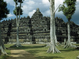 Woman Stands in Shade Beside Tall Trees Near Borobudur Temple Photographic Print by W. Robert Moore