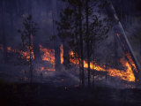 Forest Fire Burns Downfall in Lodgepole Forest Photographic Print by Michael S. Quinton