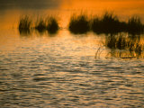 Marsh at Sunrise Photographic Print by Michael S. Quinton