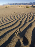Footprints in the Sand Dunes Near Stovepipe Wells Photographic Print by Rich Reid