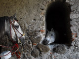 Horses Eyeing One Another Through a Window in a Stone Wall Photographic Print by Raul Touzon