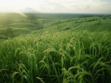 Rice Terraces and Mount Gunung in the Background, Bali Indonesia Photographic Print by  xPacifica