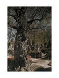 Olive Tree in the Garden of Gethsemane Below the Mount of Olives Photographic Print by Hans Hildenbrand
