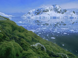 Ice Floes in Paradise Bay from a Moss Covered Slope Photographic Print by Gordon Wiltsie