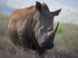 Rhinoceros on Borana Ranch Photographic Print by Michael Nichols