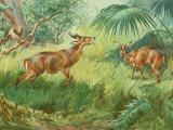 This Painting Depicts an Indian Muntjac Barking in a Forest Photographic Print by Walter Weber