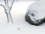 Snow Covered Boulder and Tree Photographic Print by Raul Touzon