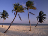 Empty Beach with Palm Trees in Key West Photographic Print by Michael Melford