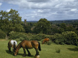 Work Horses and Cow Graze in Pasture with Village Church in Distance Photographic Print by Melville Grosvenor